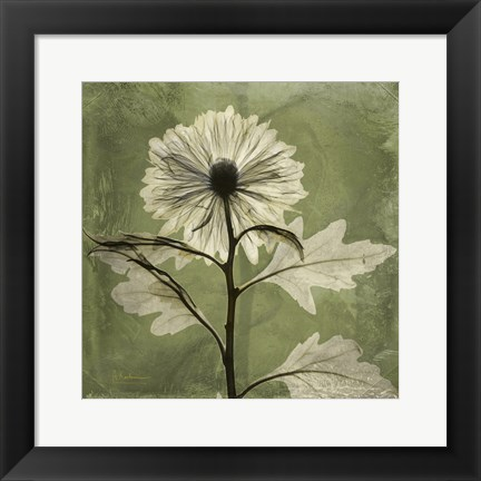 Framed Chrysanthemum Green Print