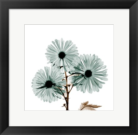 Framed Chrysanthemum Love Print