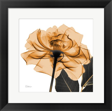 Framed Copper Rose Black Leaves Print