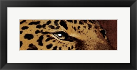 Framed Leopard Eyes Print