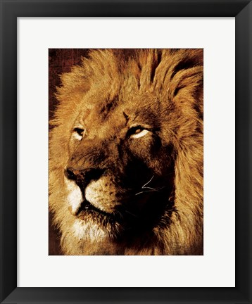 Framed Lion 1 Print