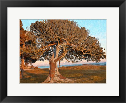 Framed One Tree Print