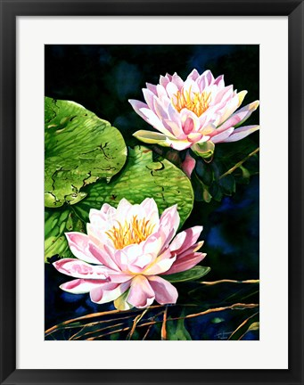 Framed Waterlily Reflections Print