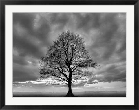 Framed Great Tree Print