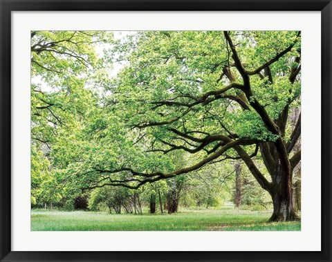 Framed Green Woods 4 Print