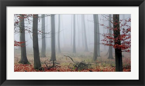 Framed Misty Woods Print
