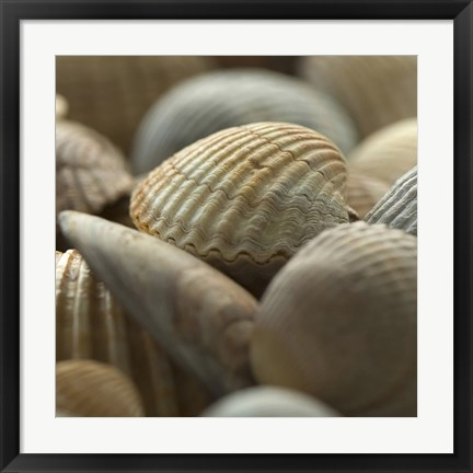 Framed Shells 2 Print