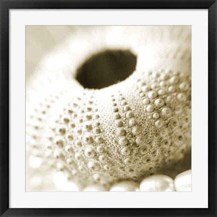 Framed Shells and Pearls 2 Print