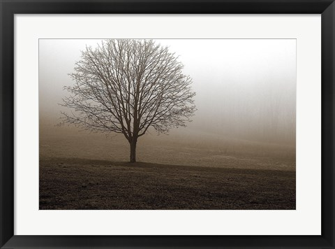 Framed Tree in Mist 1 Print