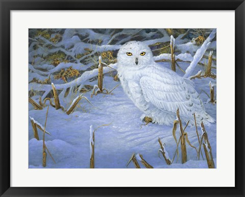 Framed Incoming Snowy Owl Print