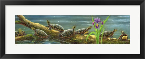 Framed Suncatchers Painted Turtles Print