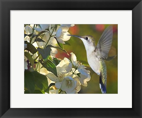 Framed Flower Dance II Print