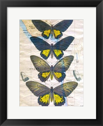 Framed Butterfly Map II Print