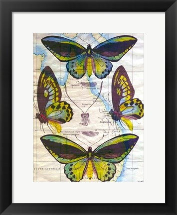 Framed Butterfly Map III Print