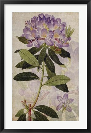 Framed Rhododendron II Print