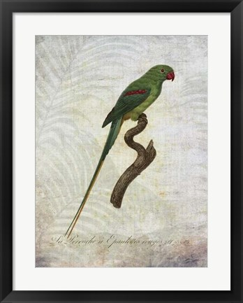 Framed Parrot Jungle III Print