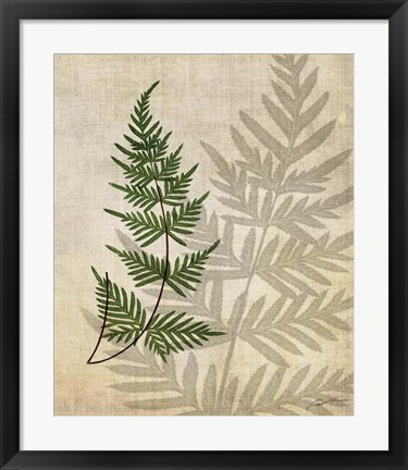 Framed British Ferns III Print