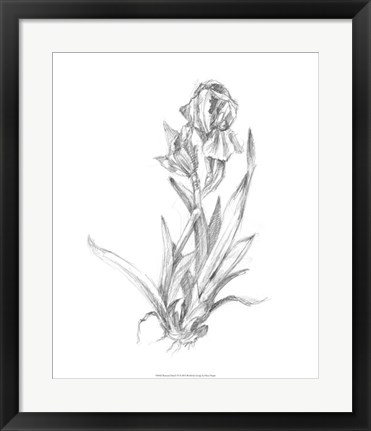 Framed Botanical Sketch VI Print