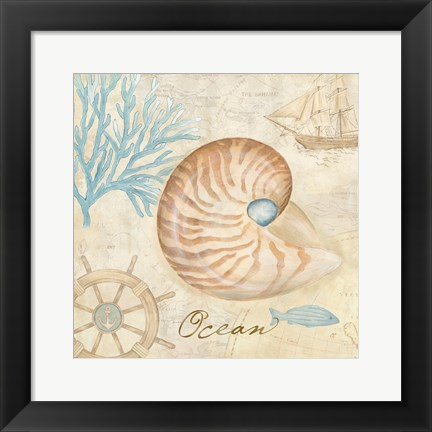 Framed Nautical Shells III Print
