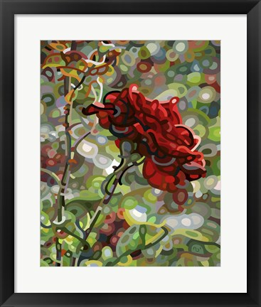 Framed Last Rose Of Summer Print
