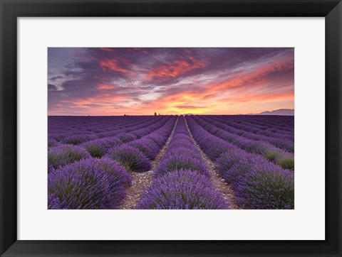 Framed Sunrise over Lavender Print