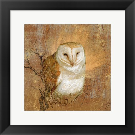 Framed Owl in the wood Print