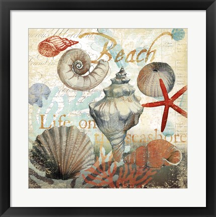 Framed Shell Collector1 Print