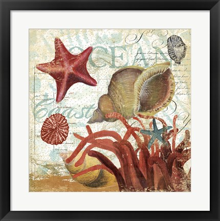 Framed Shell Collector 1I Print