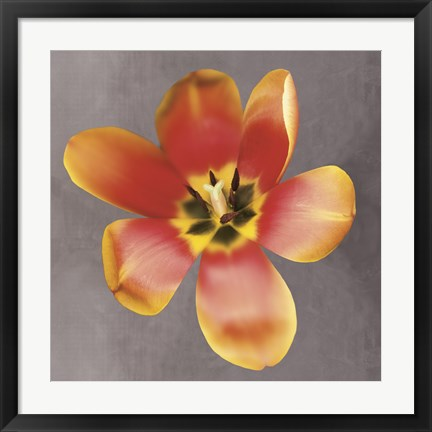 Framed Sunshine Tulip Print