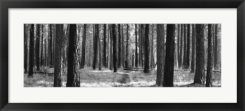 Framed Tree Curtain Print