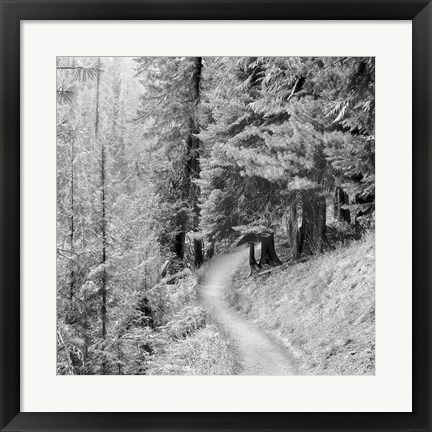 Framed Pine Path Print