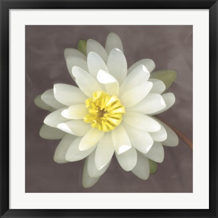 Framed Water Lily Print