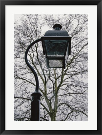 Framed Lamp and Branches (Color) Print
