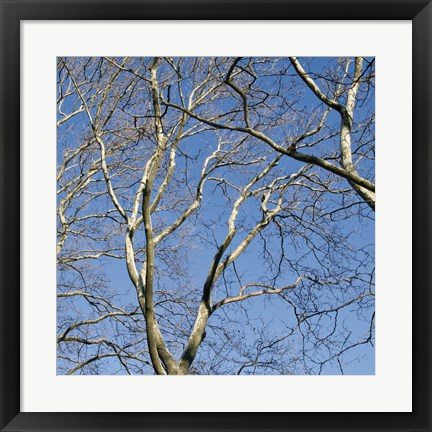 Framed January Branches II (Color) Print