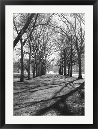 Framed Branch Shadows (b/w) Print