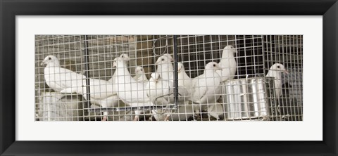 Framed Doves Print