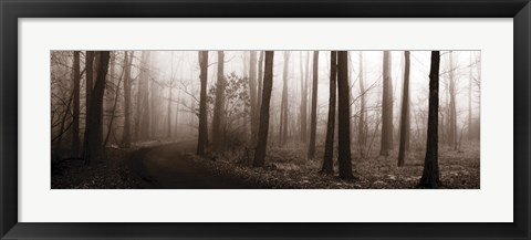 Framed Forest Path (Sepia) Print