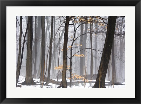 Framed Foggy Forest Print