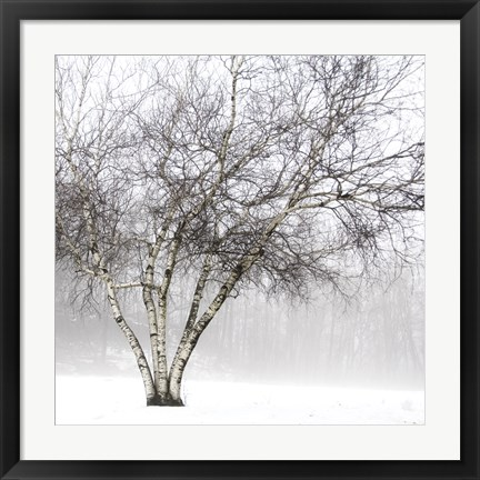 Framed Winter Birch Print