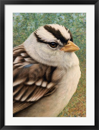Framed Sparrow Print