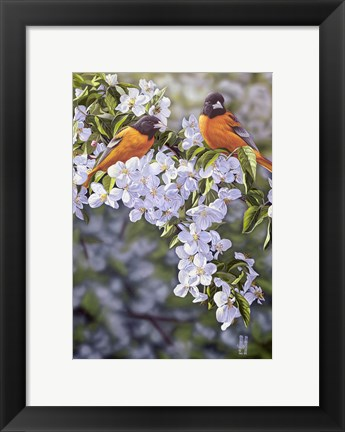 Framed Orioles in the Orchard Print