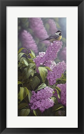 Framed Scents of Spring - Chickadee Print