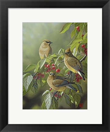 Framed Three's Company - Cedar Waxwings Print