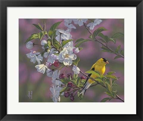 Framed Gold Pink White Goldfinch Print