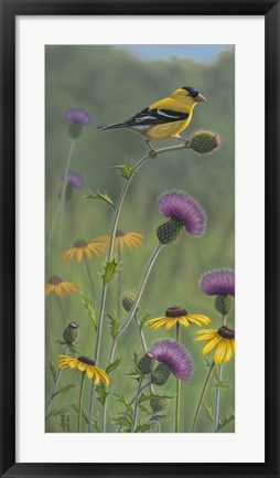 Framed Thistle Gold Goldfinch Print