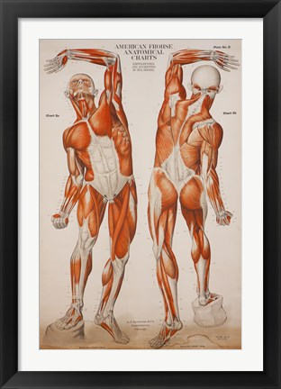 Framed American Frohse Anatomical Wallcharts, Plate 2 Print