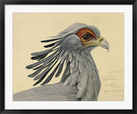 Framed Abyssinian Secretary Bird Print