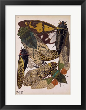 Framed Insects, Plate 11 Print