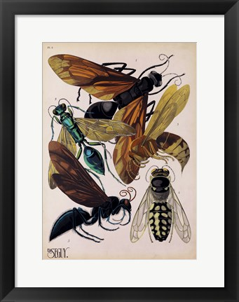 Framed Insects, Plate 15 Print