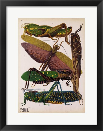 Framed Insects, Plate 16 Print